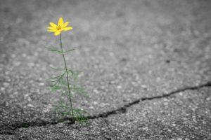 Fleur sur asphalte - La vie malgré tout -